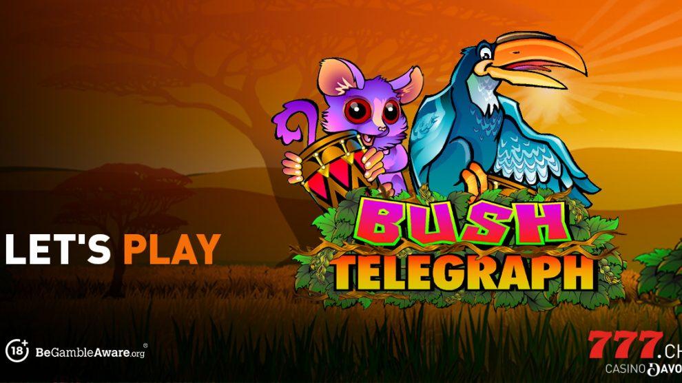 Casino777, Slot, Bush Telegraph